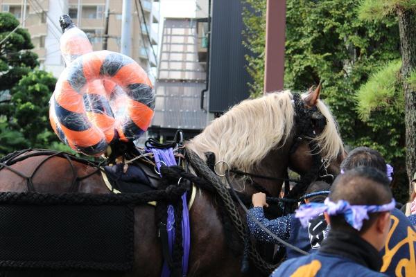 2016年ボシタ祭り重浦畜産熊本凌本祭写真画像