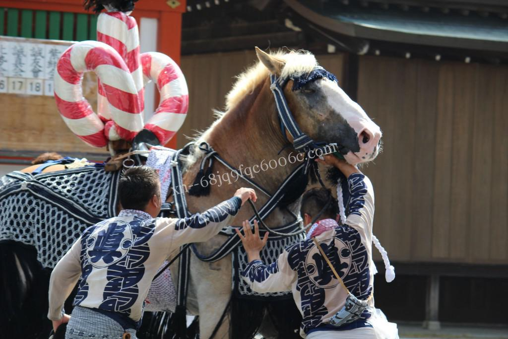 2016年ボシタ祭り肥後眞會飾卸写真画像