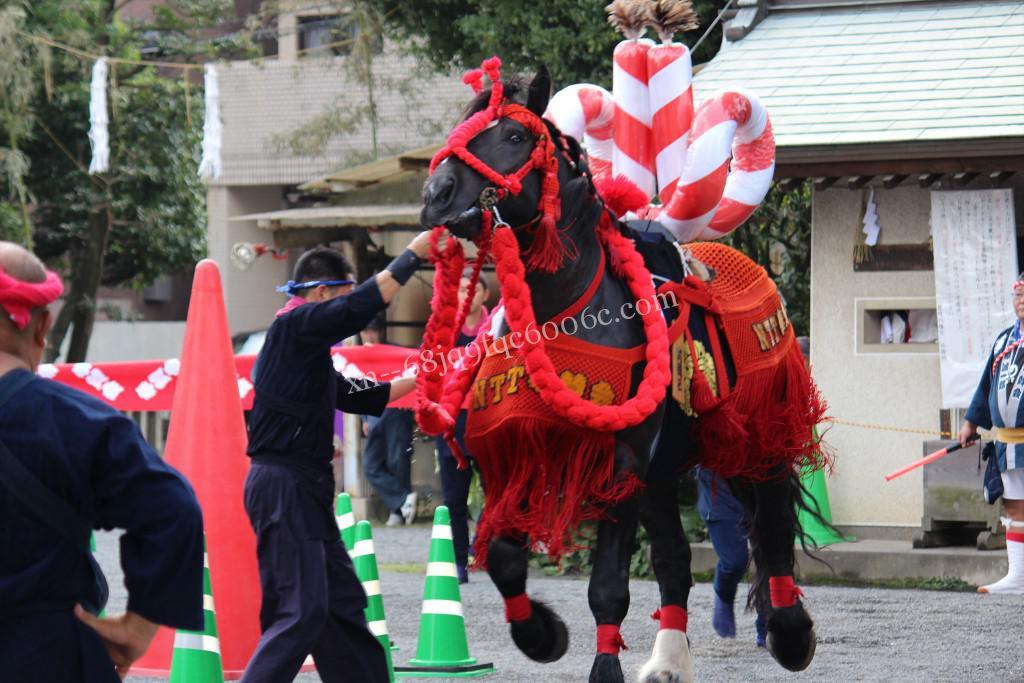 2016年ボシタ祭りNTTグループ奉賛会飾卸写真画像