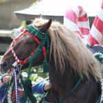 2016年ボシタ祭り東海望星会飾卸写真画像