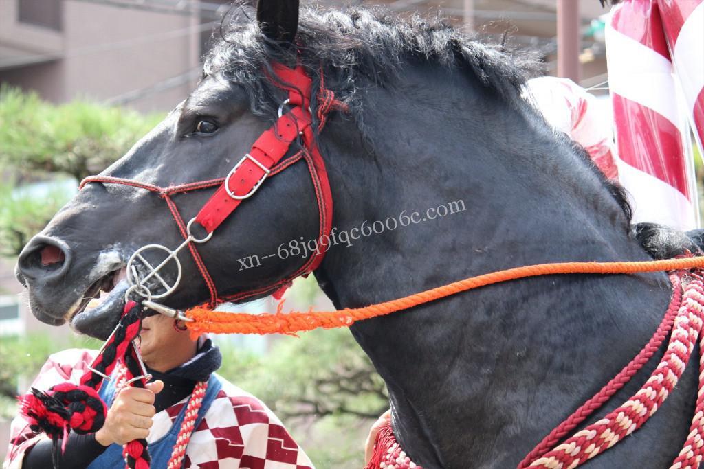 2016年ボシタ祭り高麗門飾卸写真画像
