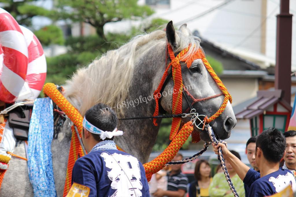 2016年ボシタ祭り宮村牧場知友會飾卸写真画像